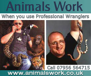 Animal World Animals work