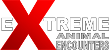 Extreme Animal Encounters LTD Logo
